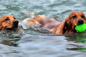 Les bienfaits de la baignade chez les aînés