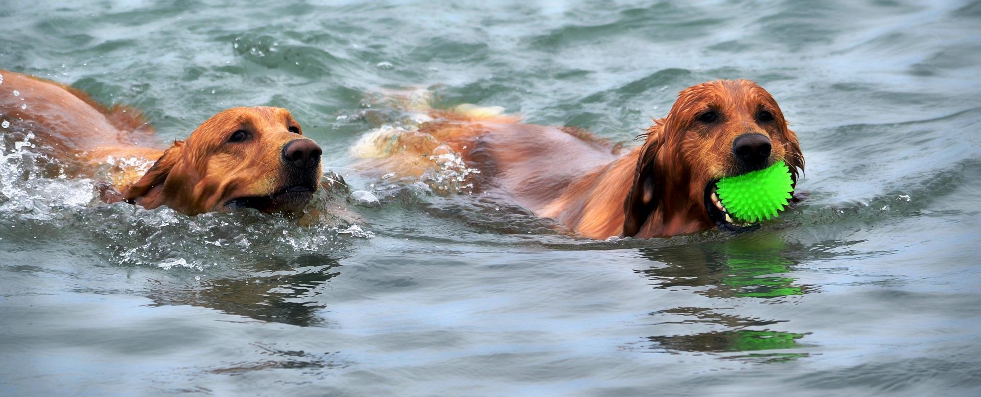 Les bienfaits de la natation chez les aînés