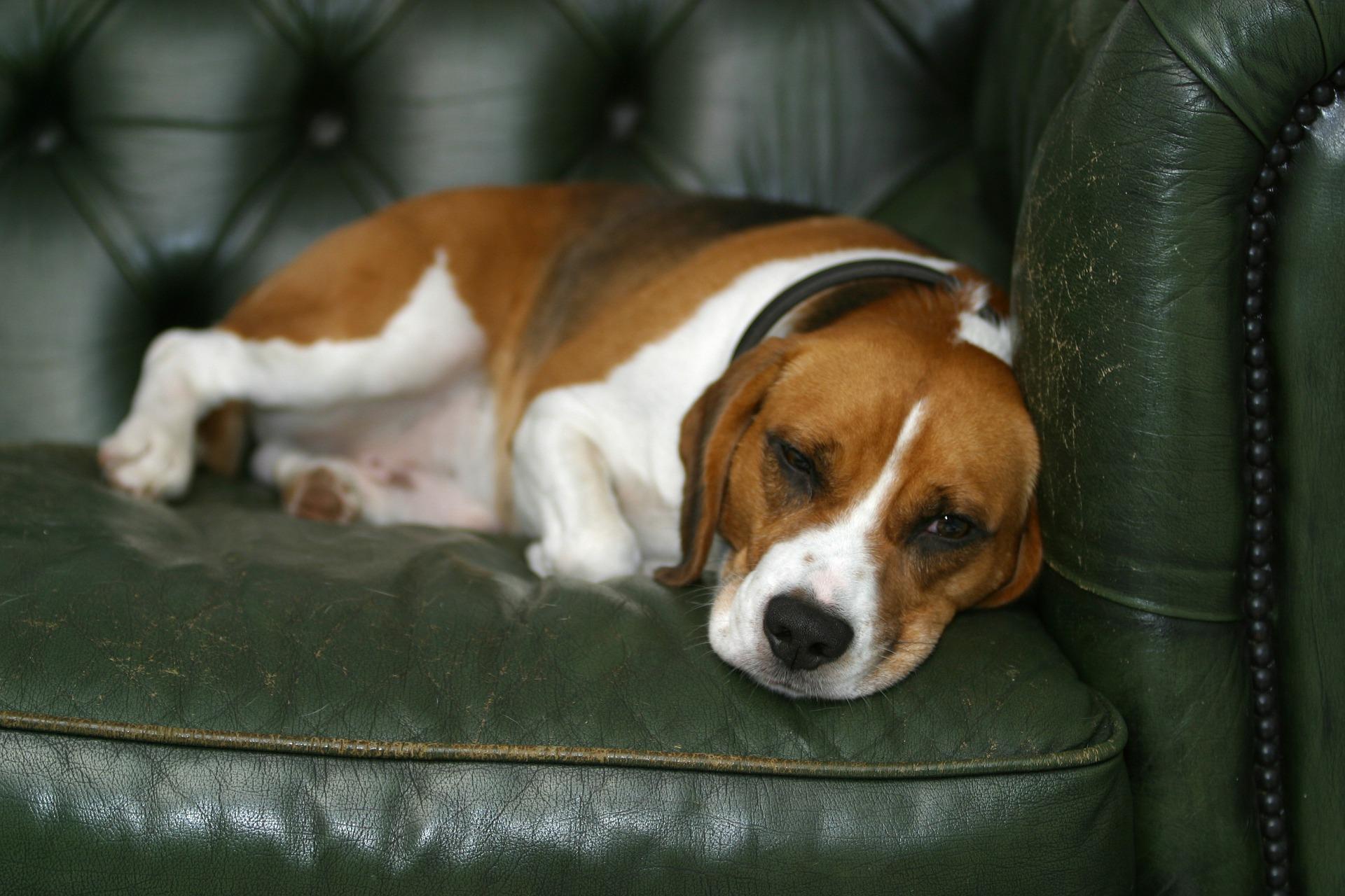 confort d'un fauteuil sécuritaire